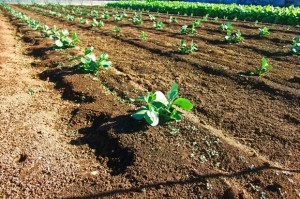 農業の風景写真