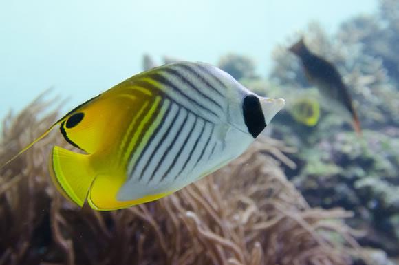 熱帯魚などペットの水槽の電気を節約するコツ!どれくらい電気代がかかる?